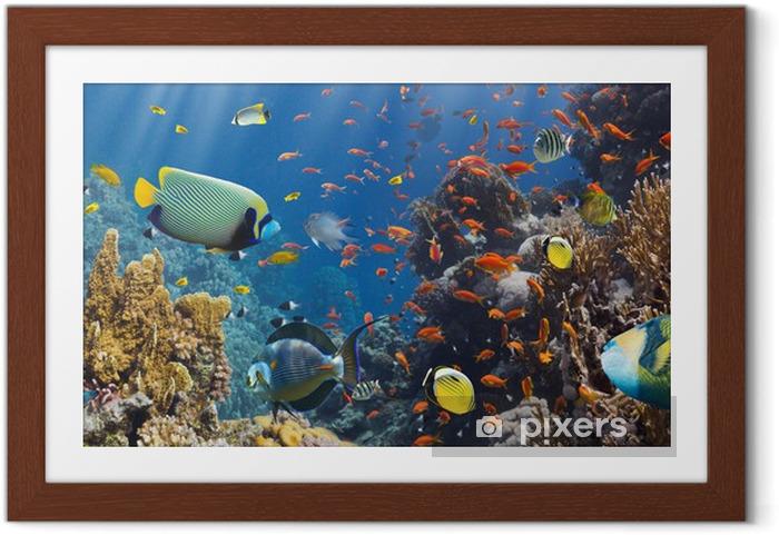 Poster en cadre Corail et poissons - Poissons