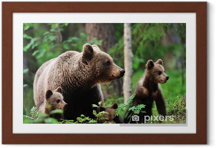 Gerahmtes Poster Brown-Bär mit Jungen im Wald - Themen