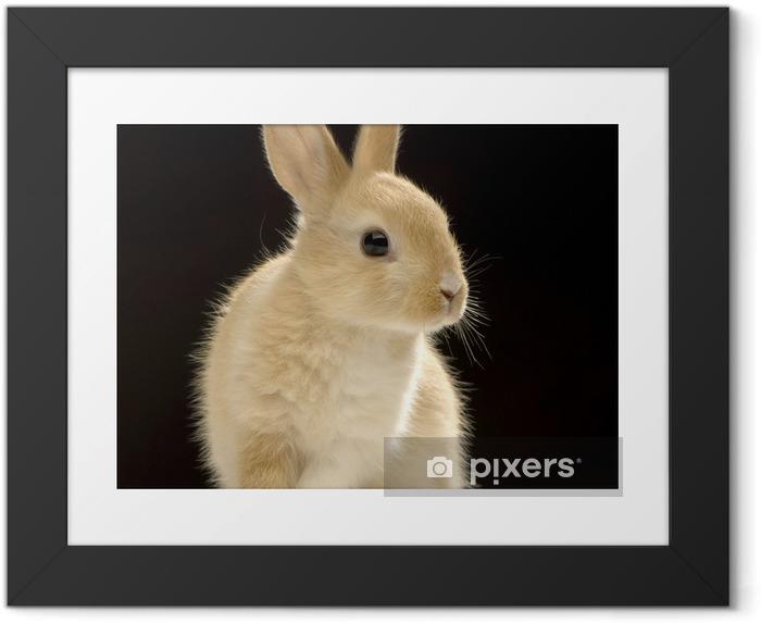 Póster Enmarcado Conejo en el fondo negro - Conejos