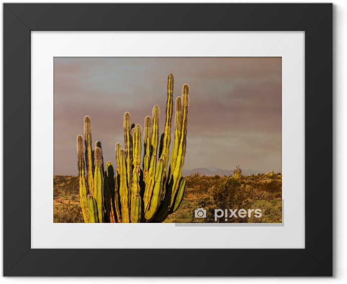 Poster i Ram Kaktus i Mexiko - Natur och vildmark