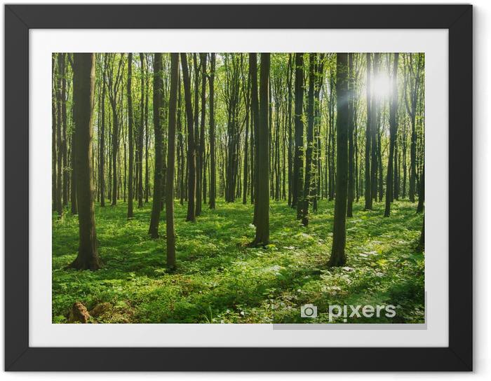 Plakat w ramie Drzew leśnych. zieleni drewno światło słoneczne tła. - Przeznaczenia