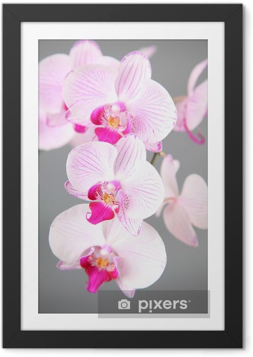 Póster com Moldura Pink orchid - Temas