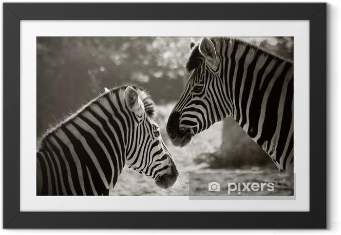Plakat w ramie Portret do Zebra, sepia spojrzenie - Tematy