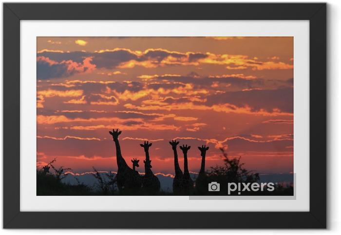 Poster en cadre Giraffe Silhouette - faune Fond africain - Nature Coloré et Skies Majestic - Animaux