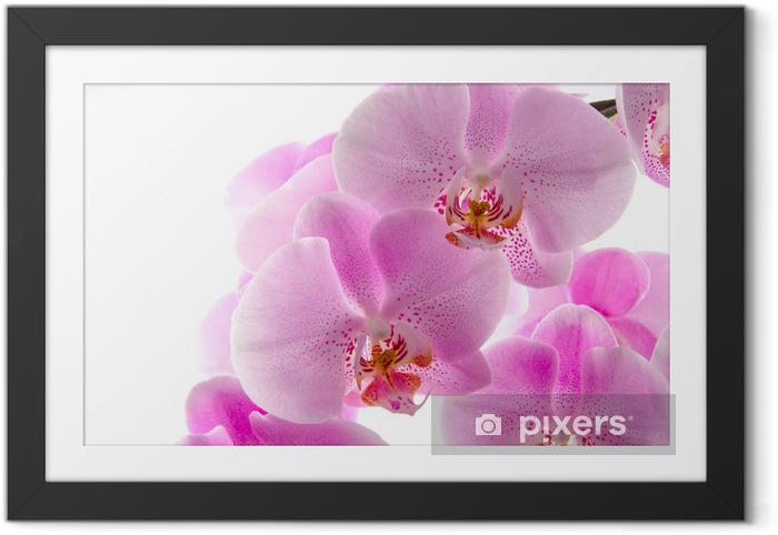 Póster com Moldura Orchidee - Temas
