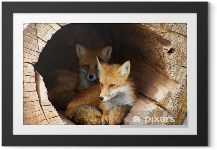 Plakat w ramie Twin Fox ukryte w wydrążonej dzienniku - Życie