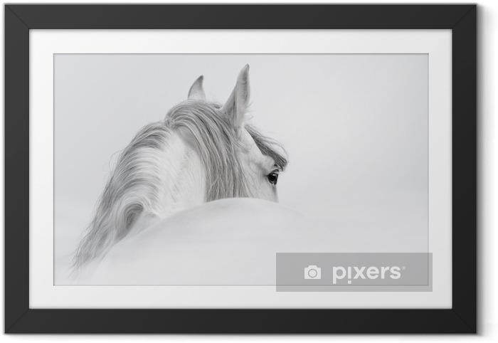 Plakat w ramie Andaluzyjski Koń w mgle - iStaging