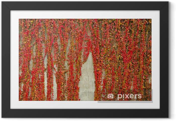 Poster en cadre Plantes grimpantes colorées couvre mur en béton. Couleurs d'automne. - Saisons