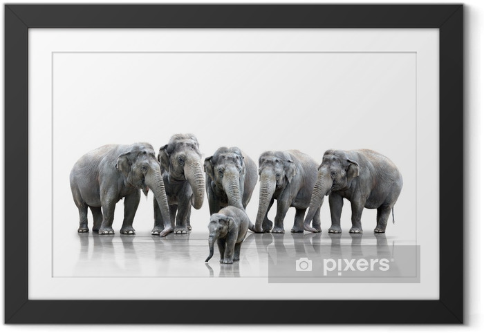 Poster en cadre Elephant Herd - Mammifères
