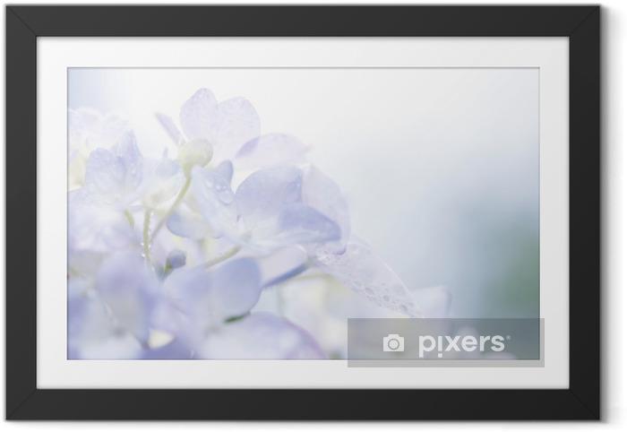 Póster Enmarcado Hortensia y gotas de agua - Flores