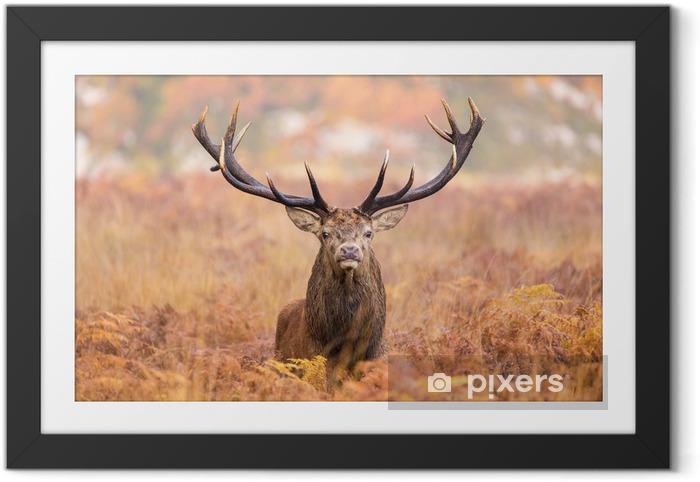Plakat w ramie Duży jelenia pieszo w kierunku kamery - Tematy