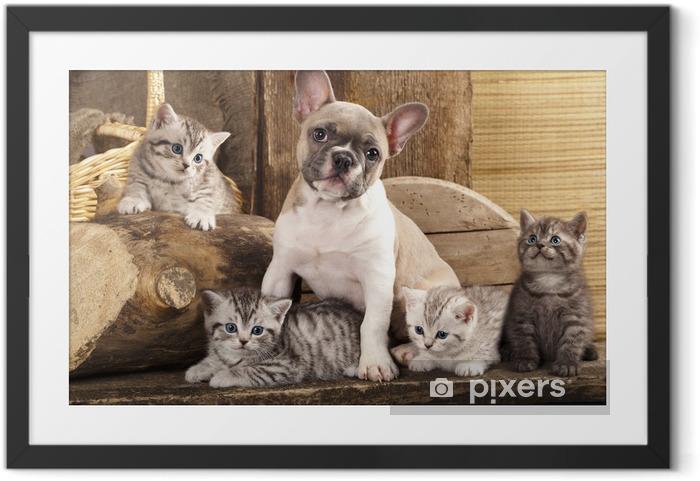 Plakat w ramie Kot i pies, Brytyjskie kocięta i Buldog francuski - Tematy