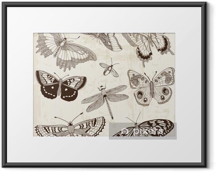 Plakat w ramie Wektorowa zestaw: elementy projektu kaligraficzne i strony Deco motyla - Inne Inne
