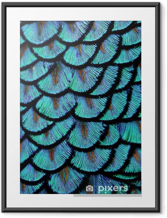 Plakat w ramie Blue feathers - Zwierzęta