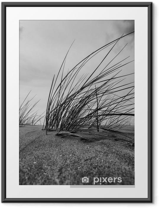 Plakat w ramie Marram Trawa Close-up w czerni i bieli - Krajobrazy