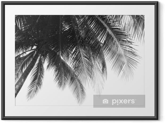 Plakat w ramie Liść piękne palmy na białym tle - Rośliny i kwiaty