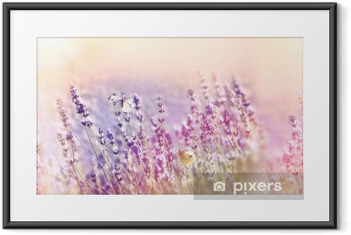 Plakat w ramie Piękny ogród kwiatowy - ogród lawendowy i biały motyl - Zwierzęta
