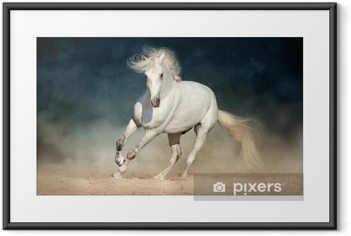 Plakat w ramie Biały koń biegnie do przodu w kurzu na ciemnym tle - Zwierzęta