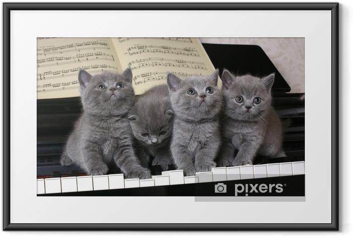 Ingelijste Poster Vier Britse kitten op de piano - Thema's