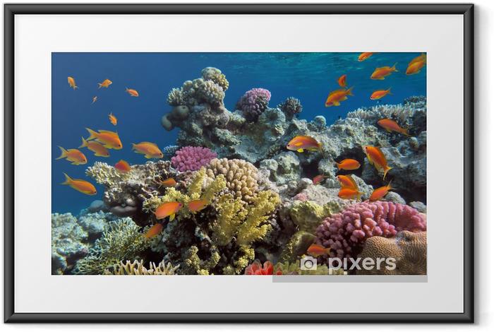 Plakat w ramie Podwodny strzelać żywe rafy koralowej z ryb - Rafa koralowa
