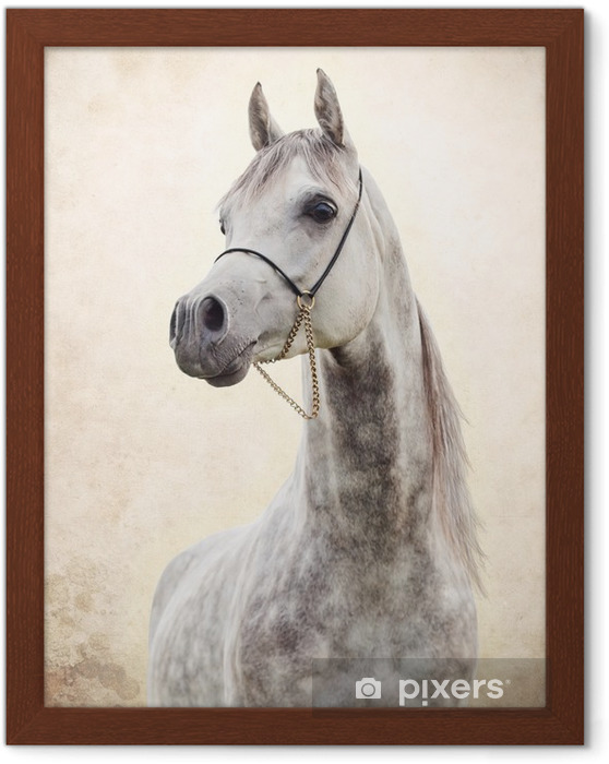 Image encadrée Portrait de gris bel étalon arabe à fond l'art - Thèmes