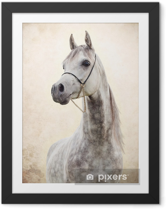 Muotokuva harmaa kaunis arabian ori taidetta taustalla Kehystetty kuva -