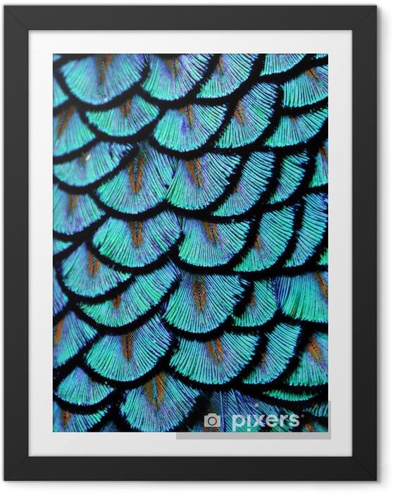 Ingelijste Afbeelding Blauwe veren - Dieren