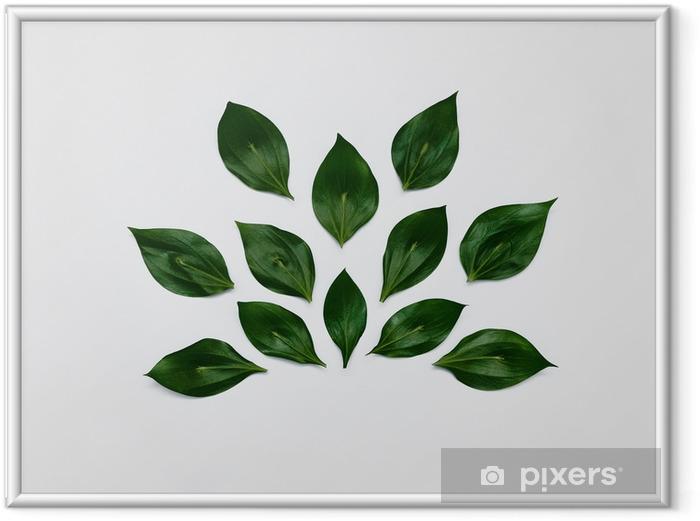 Obrazek w ramie Minimalistyczna roślina tło jasne zielone liście leżą w abstrakcyjny kształt na białym tle płaski świeckich nowoczesny minimalistyczny szablon zdjęcie - Rośliny i kwiaty