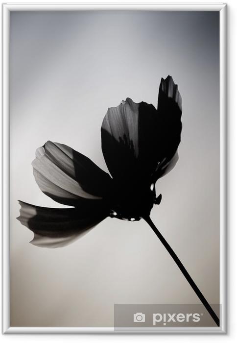Ingelijste Afbeelding Schwarze Blume / Eine im Farbton veränderte Cosmea vor einem verwischten achtergrond. - Bloemen en Planten