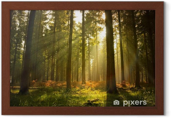 Obrazek w ramie Piękny las - Style