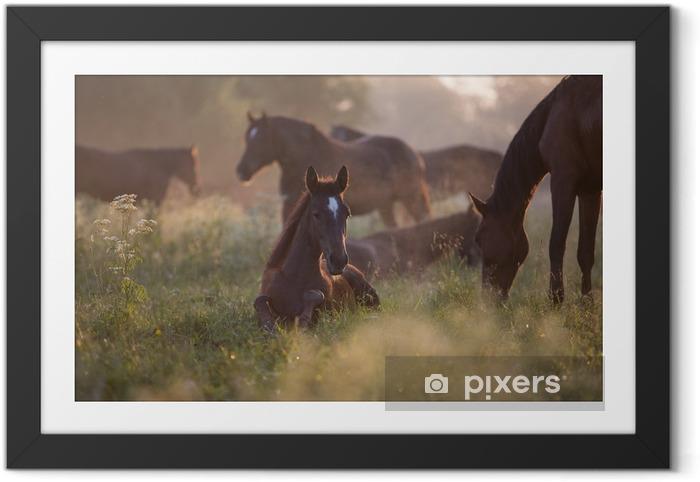 Obrazek w ramie Źrebię o świcie - Zwierzęta