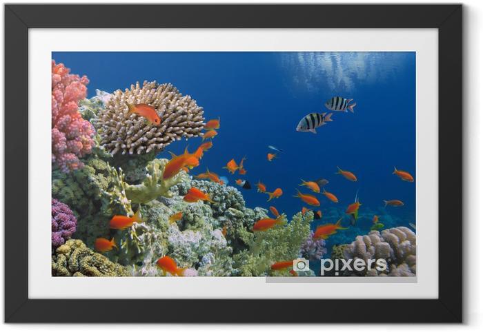 Obrazek w ramie Tropikalnych ryb na rafy koralowej w Morze Czerwone - Przeznaczenia