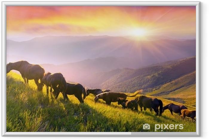 Obrazek w ramie Konie na szczycie góry - Zwierzęta