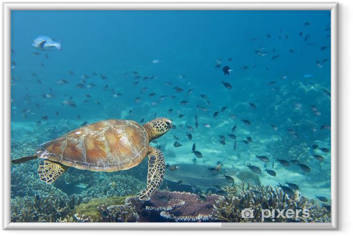 Gerahmtes Bild Ein Meer Schildkröte Porträt Nahaufnahme während looking at you - Fische