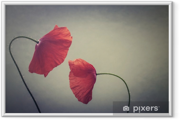 Ingelijste Afbeelding Kunst papavers - Bloemen en Planten