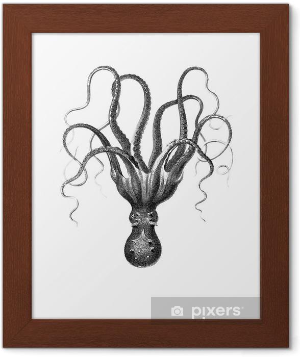 Poster en cadre Poulpe - science &; nature