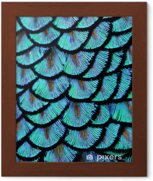 Poster en cadre Plume bleue - Animaux