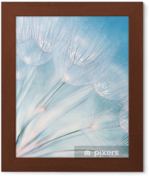 Poster en cadre Fleur de pissenlit abstraite -