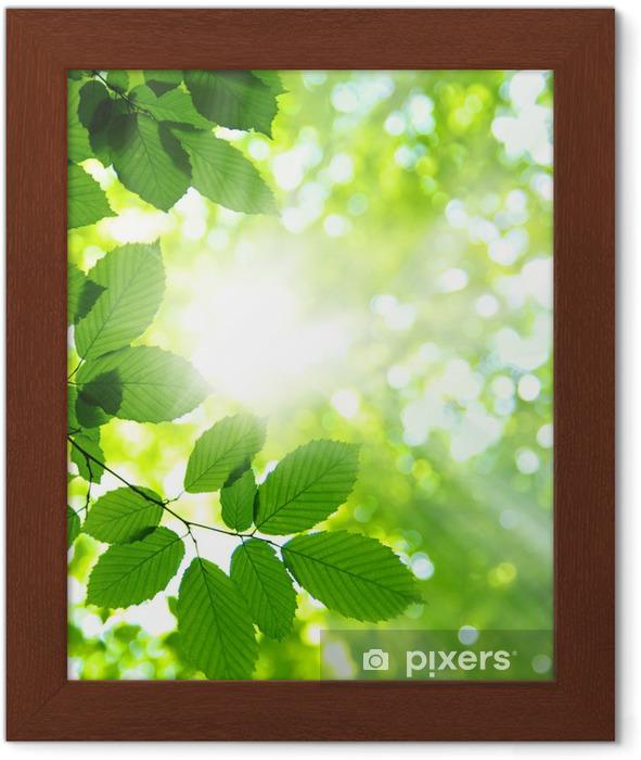 Póster Enmarcado Green leaves - Temas