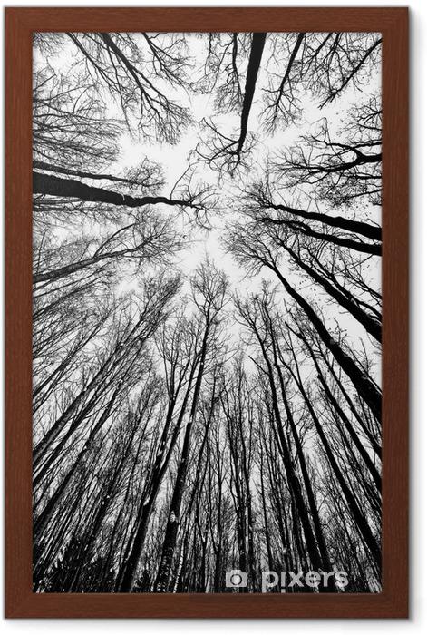 Poster en cadre Arbres en noir et blanc des silhouettes - Styles