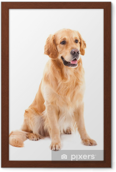 Golden Retriever Puppy Dog Sitting by Fence Photo Wall Picture 8x10 Art Print
