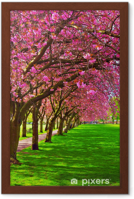 Walk path surrounded with blossoming plum trees Framed Poster - Themes