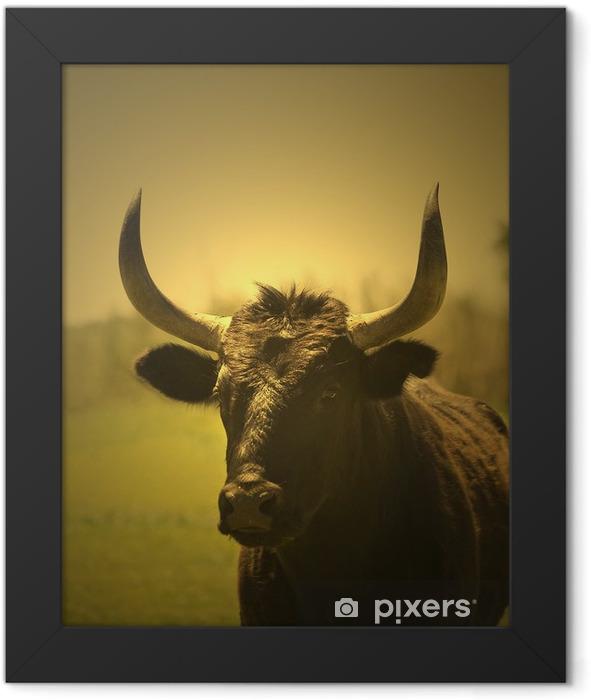 tête de taureau Framed Poster - Mammals