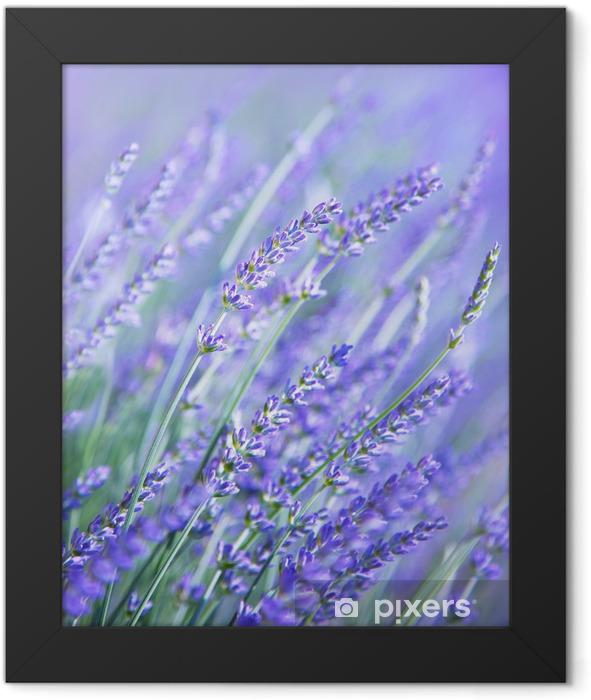 Lavender flower field Framed Poster - Themes