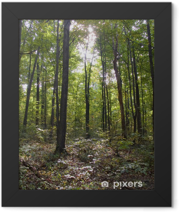 Appalachian Trail Framed Poster - Forests