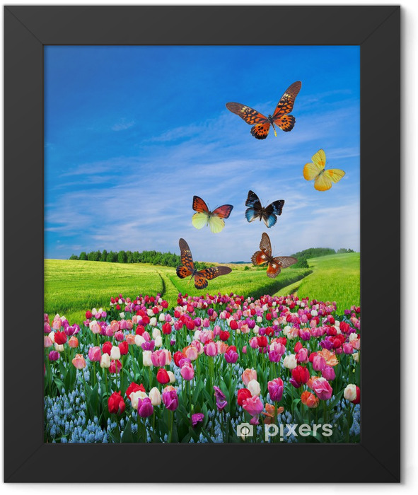 Field of colorful flowers and a butterfly group Framed Poster - Themes