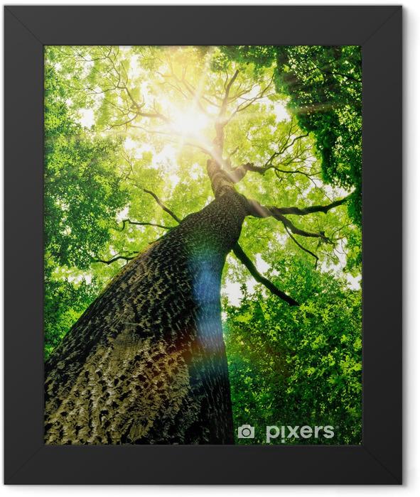 forest Framed Poster -