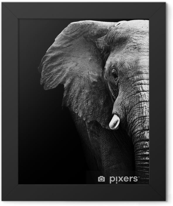 Plakat w ramie Słoń z bliska - Style