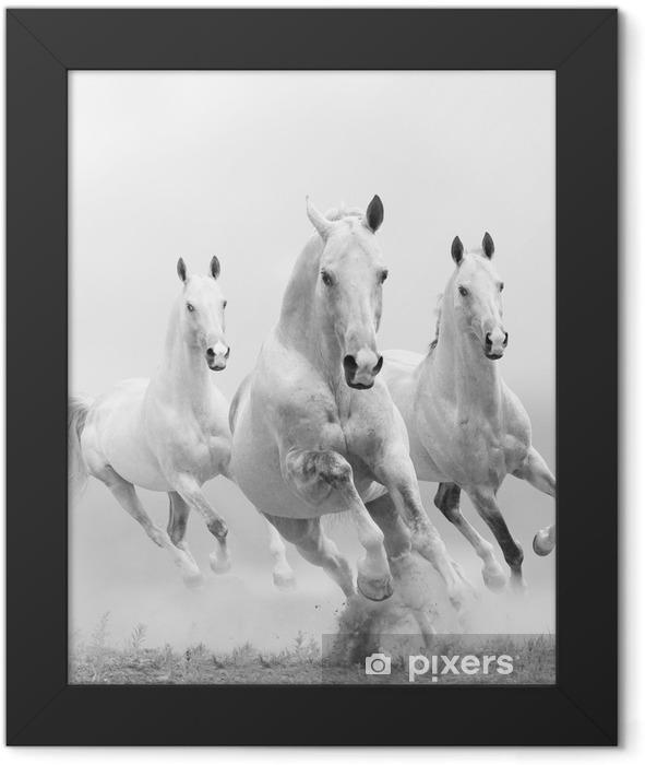 Plakat w ramie Białe konie w kurzu -