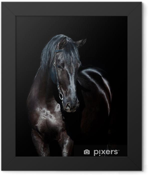 Plakat w ramie Czarny koń wyizolowanych na czarnym tle - iStaging